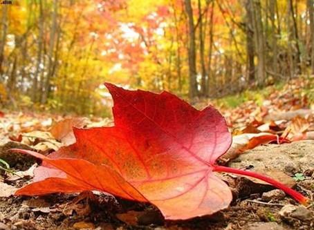 Γαλλία: Παράγουν ρεύμα από τα... πεσμένα φύλλα! [video]