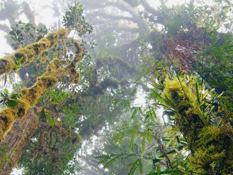 Πώς η διαχείριση των δασών θα συμβάλλει στην αντιμετώπιση της κλιματικής αλλαγής