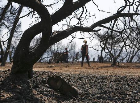 Κλιματική αλλαγή Ελλάδα: Το 40% της χώρας θα ερημοποιηθεί έως το τέλος του αιώνα