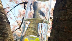 ピスタチオオパールの水~守るを見直す時期~2