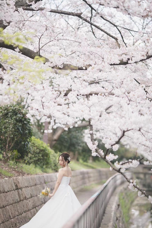 大阪での桜の季節の前撮り画像