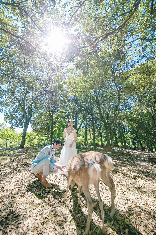 ウェディングドレス 奈良公園