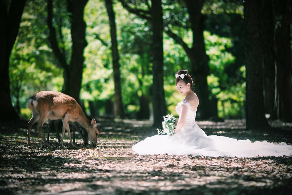 前撮り 奈良公園