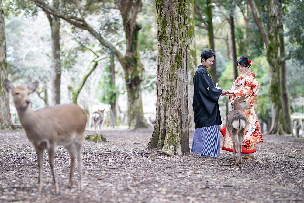 前撮り奈良公園