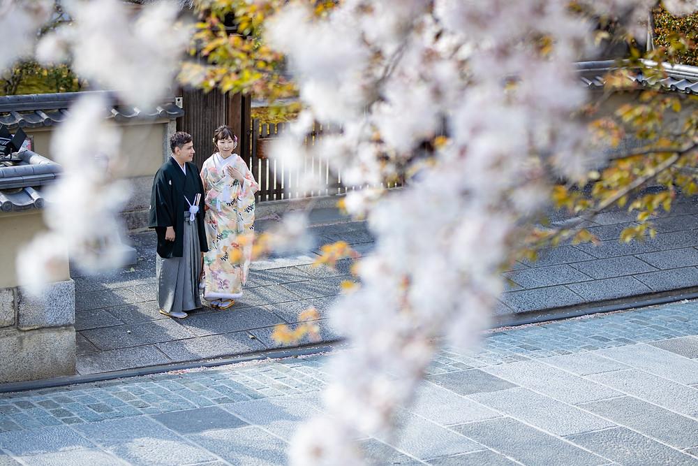京都 桜の前撮り