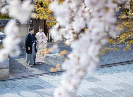 京都桜前撮り