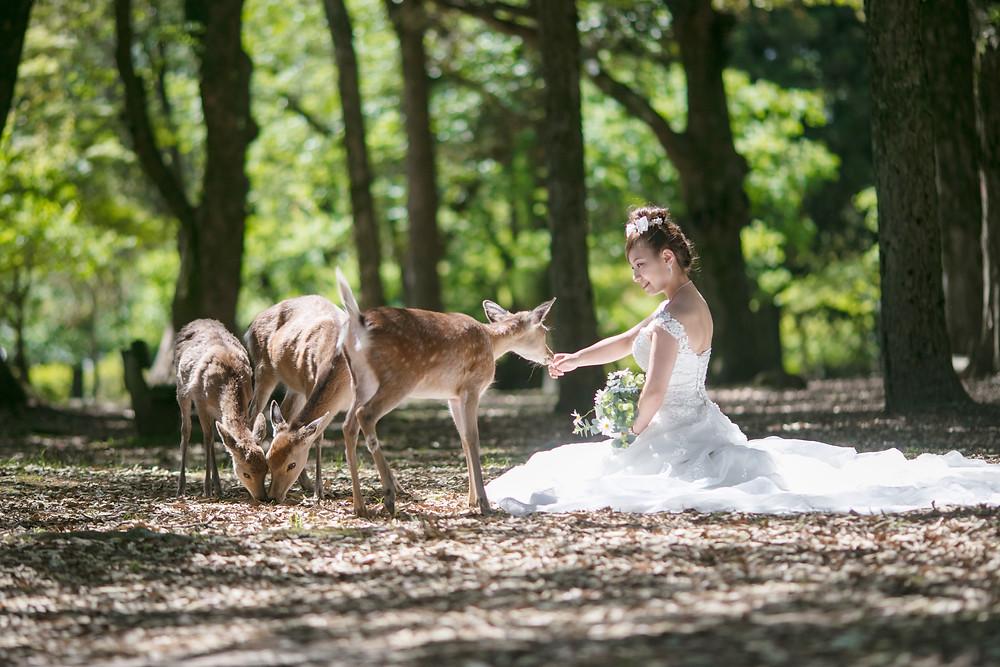 奈良公園前撮りウェディングドレス