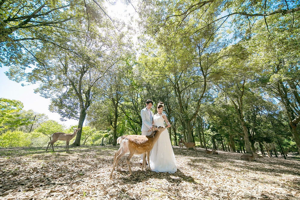 鹿と奈良公園での撮影ができます