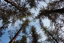 tree_vertical.JPG