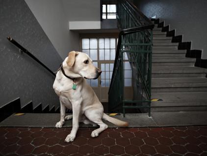 Regimento interno de condomínio pode proibir animais de estimação?