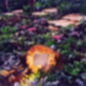 Steven Sotloff Memorial Garden in Pinecrest Gardens Miami Florida cindy lerner