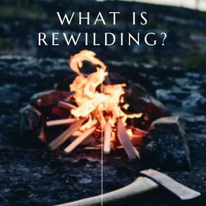 Rewilding - what is it?