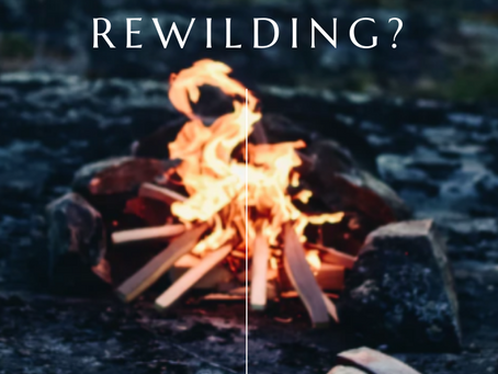 Rewilding - what is it?