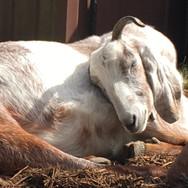 Sleepy Sherl