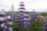 jeffrey-blum-KayCr37KyRo-unsplash.jpg