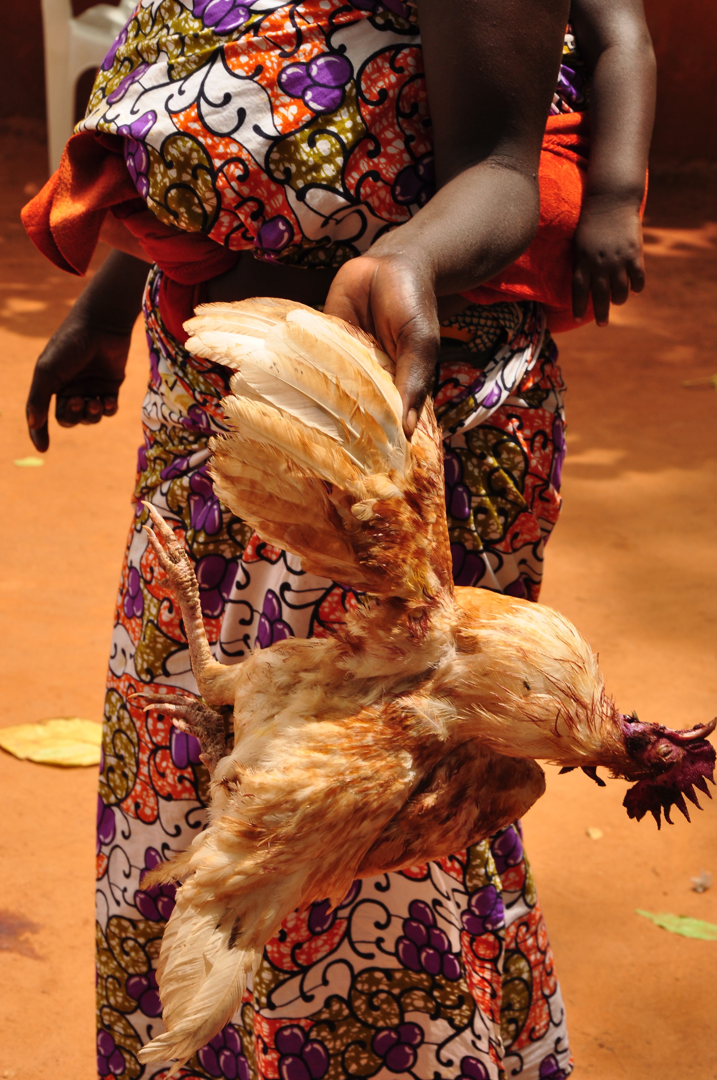 Animal sacrifice, Benin