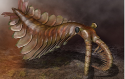 Anomalocaris (© Quade Paul)