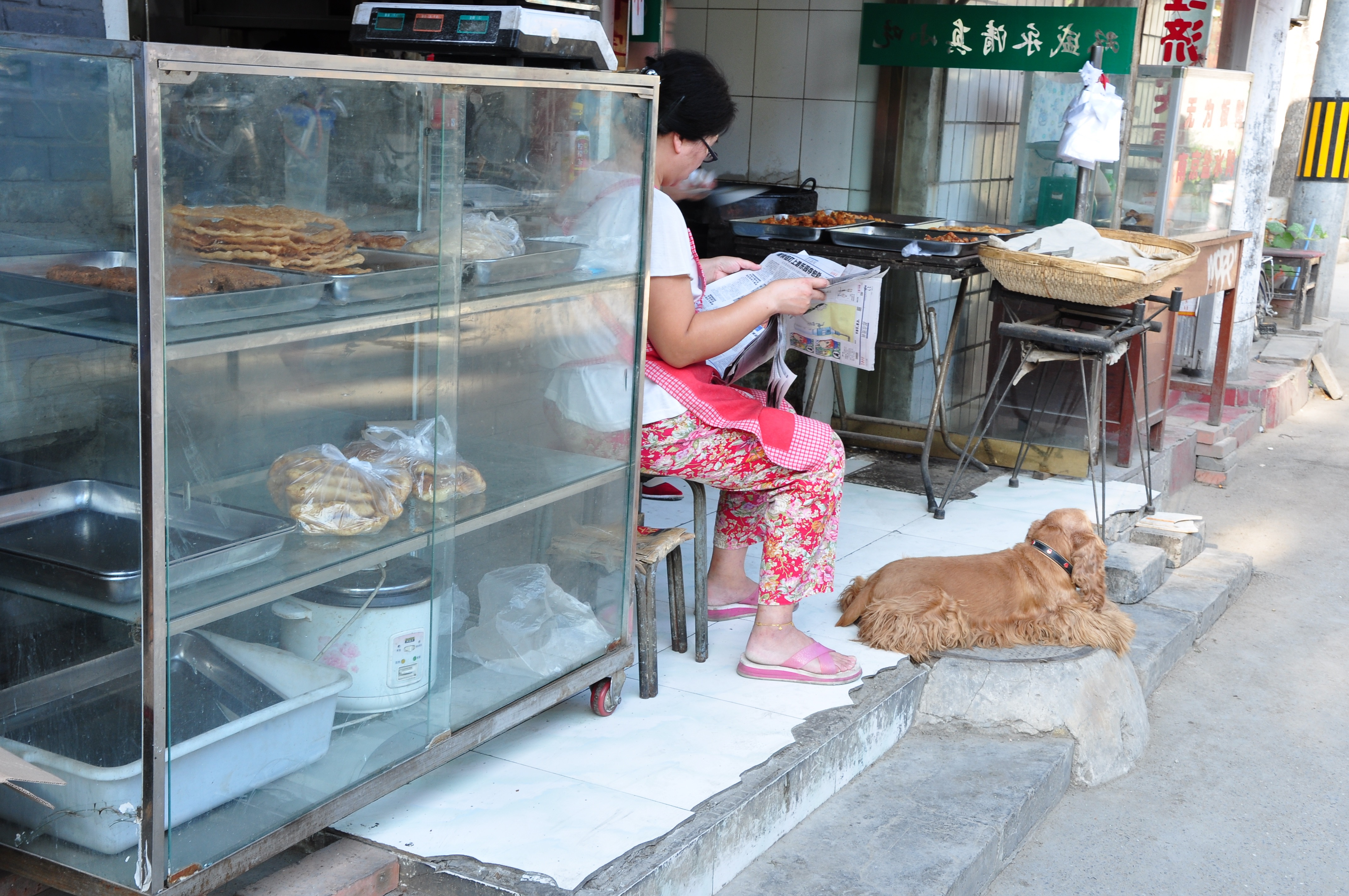Dogs as pets in China
