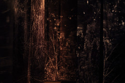 A Familiar Forest_edition #1 (Detail)