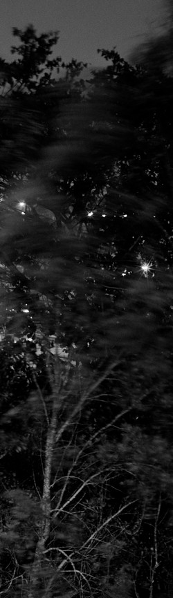 A Familiar Forest (Detail)