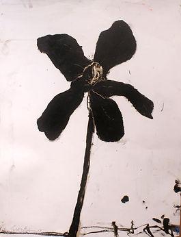 Stem in Black 13