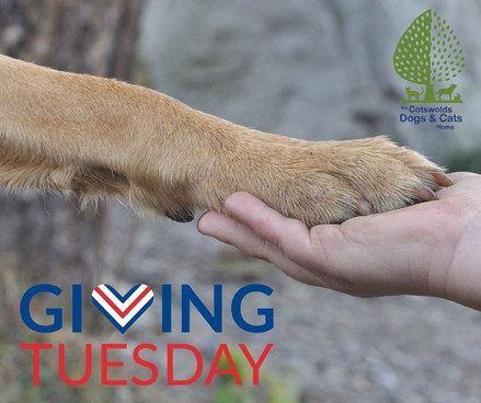 Support CDCH this Giving Tuesday!