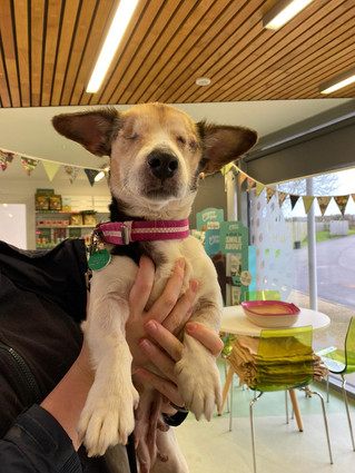 POOR PENNY was found left tied up alone and in need of emergency medical care