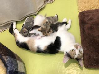 Kittens, Kittens, Kittens!