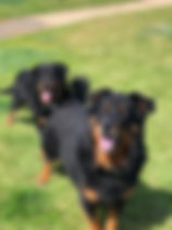 Bow and Remy - Profile.jpg