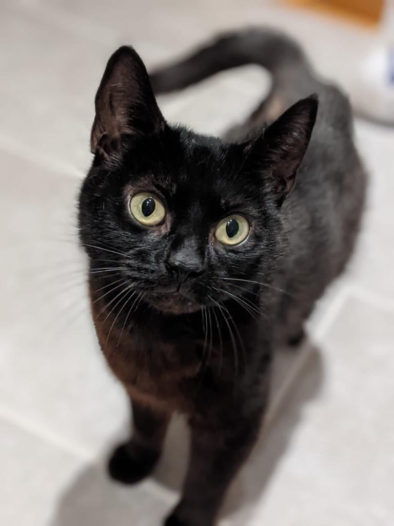 Octavia.jpg