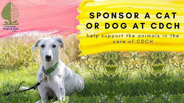 sponsor a cat or dog at CDCH.jpg