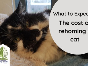 The cost of rehoming a cat