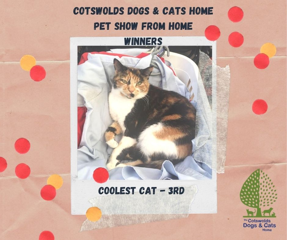 COTSWOLDS DOGS & CATS HOME - PET SHOW FR