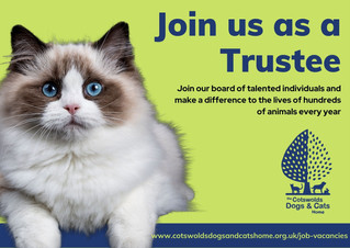 Join us as a Trustee