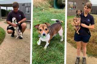 Eight Terriers Rescued From Appalling Conditions