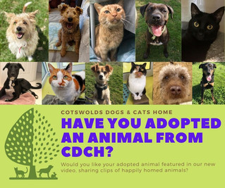 Have You Adopted An Animal From CDCH?