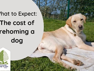 The cost of rehoming a dog