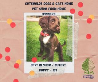 CDCH 'Pet Show From Home' WINNERS!