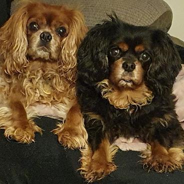 Lilly & Daisy