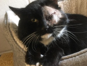 Barbossa needed emergency care which resulted with him having his eye removed