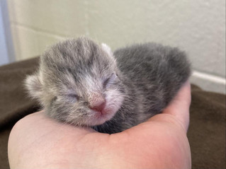 3 Day Old Kitten Abandoned Out In The Cold