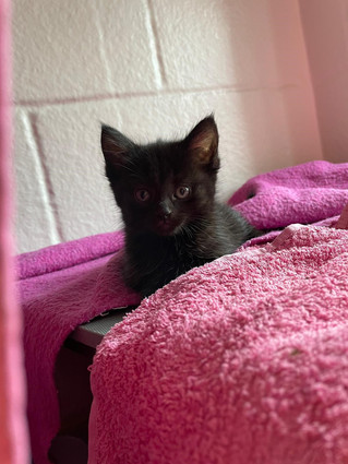 4 Week Old Kitten Found Abandoned By Mum
