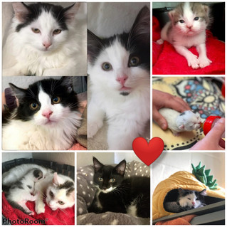 Buy a Kitten or Cat a Dinner!