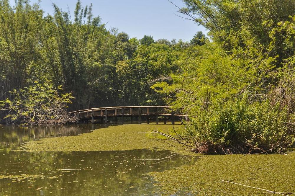 Bairro-Jardim-Botanico-Porto-Alegre