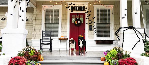 Halloween: Hide or Treat?