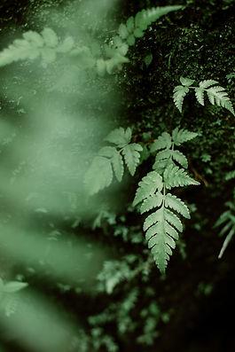 Integration Plant Medicine healing