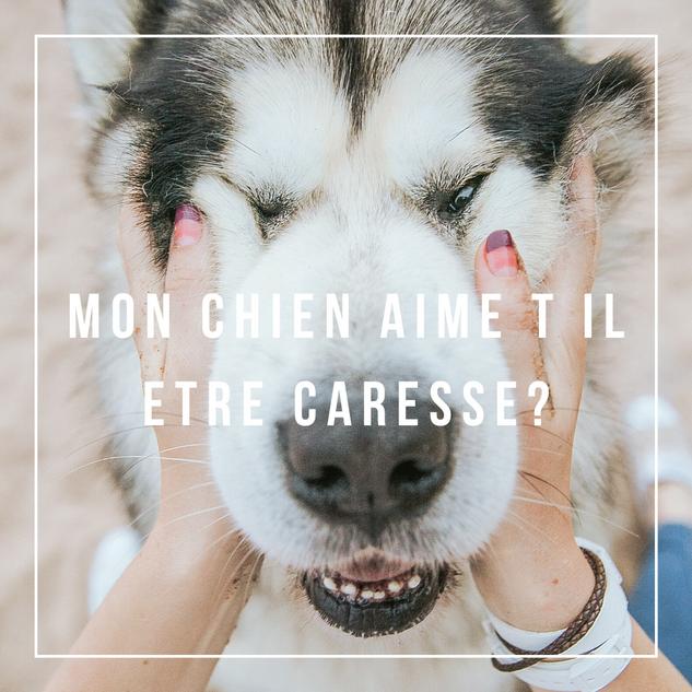 MON CHIEN AIME T IL ETRE CARESSE.png