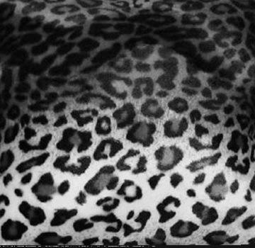 Snow Leopard Fabric