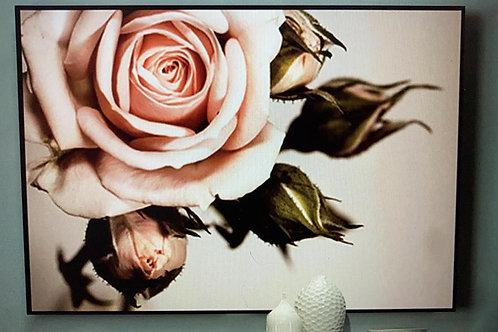 [鑽石畫] 大朶粉紅玫瑰 42x62cm (包送貨)