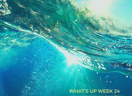 What's up week 24